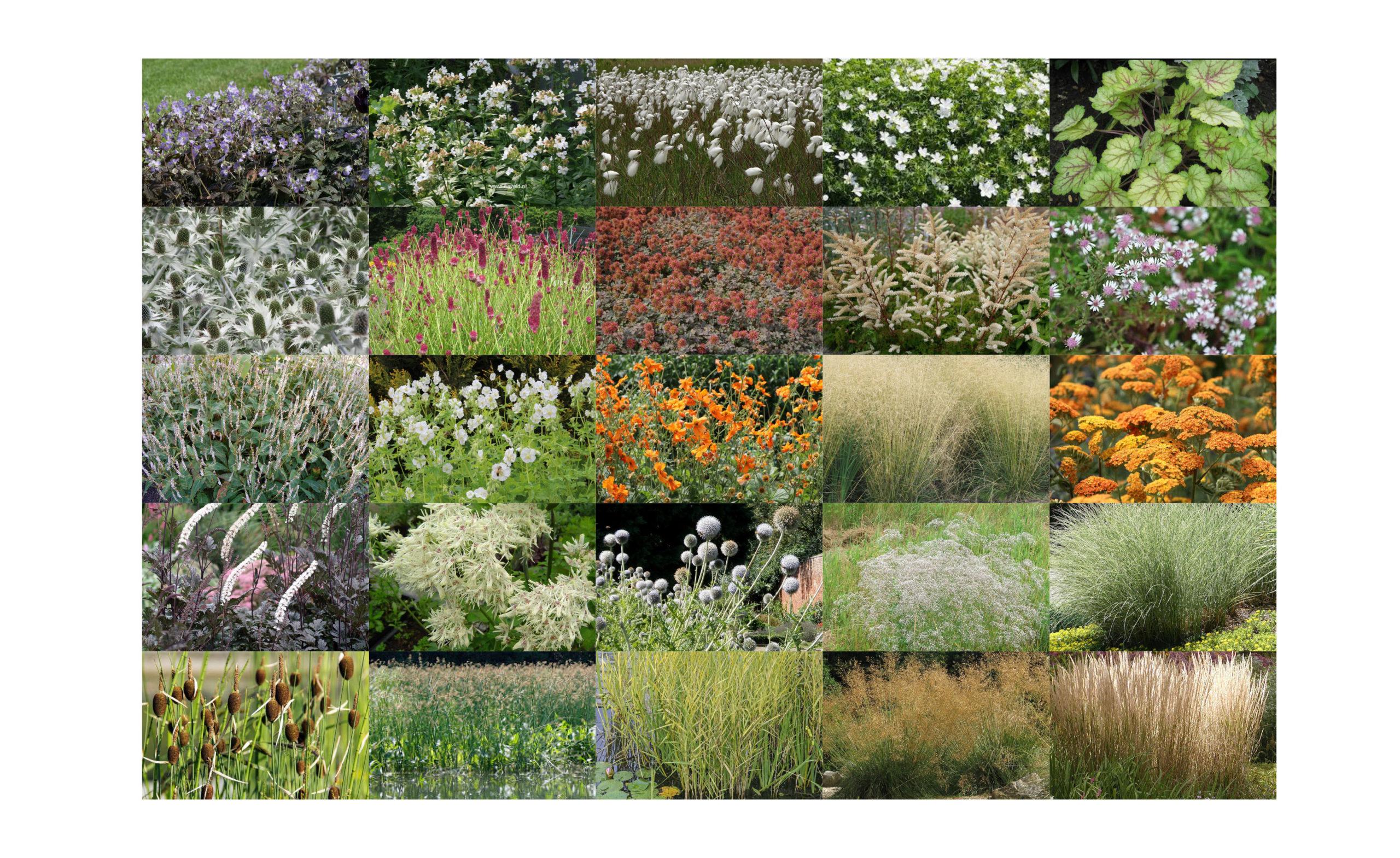 05_plant selection